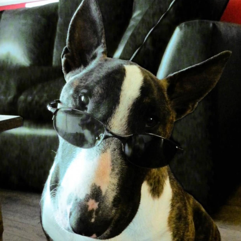 Sunglasses to Suit Your Face Shape?